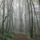 z jutranjimi meglicami gozd deluje skrivnostno...