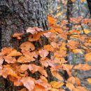 jesen v gozdu