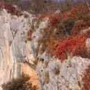 tudi v navpični skali preživijo rastline