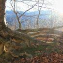 korenine nad zemljo