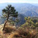 mali bor si je izbral za življenje razgledni prostor