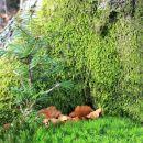 gozdne jaslice