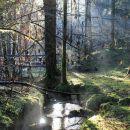 zaradi podrtega drevja je težko slediti potok...