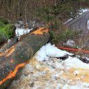 steza je zaradi vleke lesa uničena do prvega prečkanja gozdne ceste