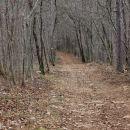 kraški gozd je čisto drugačen od našega, kočevskega