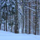 gozdna cesta se skozi gozd zlagoma dviguje do vasi štajer...