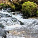 mirtoviški potok je narasel in hiter...