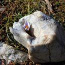 tale si je našel zavetje v skalni razpoki