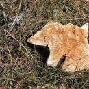 tale kamniti medo je šel z mano na kočevsko