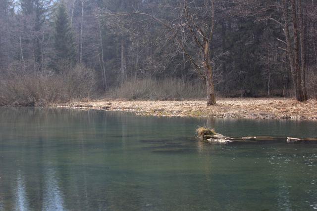 Rinža, Rozenbrun - 15.3.2015 - foto