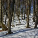 gozd pod črnim vrhom