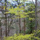zjutraj ni bilo še nič zelenega, ob povratku pa tole pomladno presenečenje...