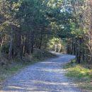 po gozdni cesti čez borove gozdove