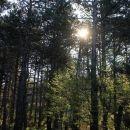 jutranje sonce v gozdu...