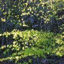 mlado listje