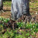 tu je še pomlad...