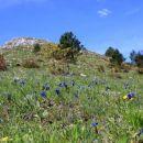 cvetoči travniki pod vrhom kuclja