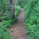 stezica po kraškem gozdu