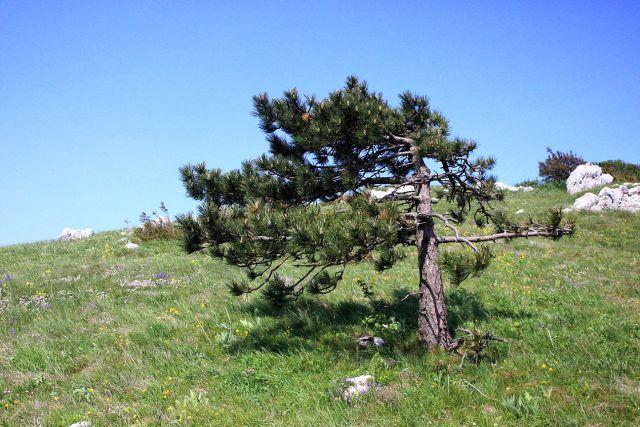 Vremščica - 17.5.2015 - foto