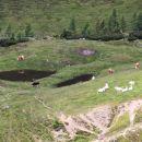 planina ... nismo še videle tako svetlih, belih krav