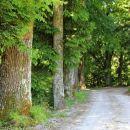 Kumrova vas, star lipov drevored ob cesti iz Svetlega potoka...