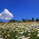 še oblak občuduje cvetno lepoto pod seboj...