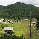 na planini dedno polje še pasejo živino...
