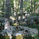 pravo ime ima ta hrib, saj je v gozdu sam kamen in skala...