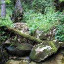 hudourniški potok pod planino konjščica...