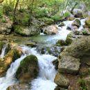 brzice potoka žabnica