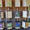 prikaz rastlinstva na smrekovcu