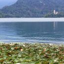 lokvanji na blejskem jezeru