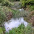 po vijuganju po planinskem polju ima unica čedalje manj vode