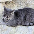 maček iz huma