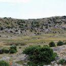 žuta lokva z zbiralniki vode za ovce