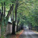 pot k samostanu pleterje
