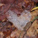 košček ledu na pomrznjenih gozdnih tleh