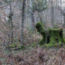 nekaj zelenega v gozdu