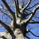 lepa drevesa ob poti...