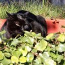 zaspan maček v dragi