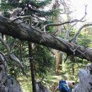 hoja čez neštete skalne ovire, podrto drevje ...