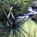veliko podrtega drevja v vodi