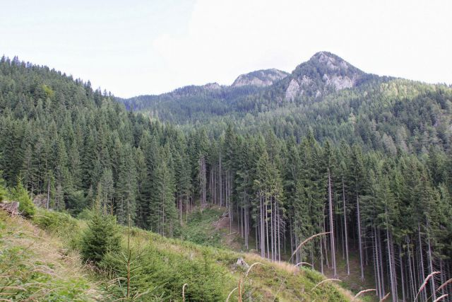 Neuspešno iskanje poti na roblekovo planino...