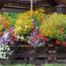 cvetoči balkoni ...