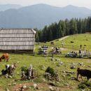planina podvežak s pastirsko kočo...