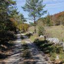 po gozdni cesti na planoti nad gradiško turo