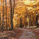 pot v zlati gozd...