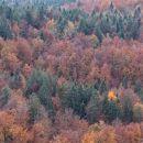 gozdovi