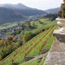 grajski vinogradi