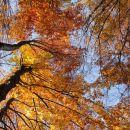 strm vzpon po jesenskem gozdu...